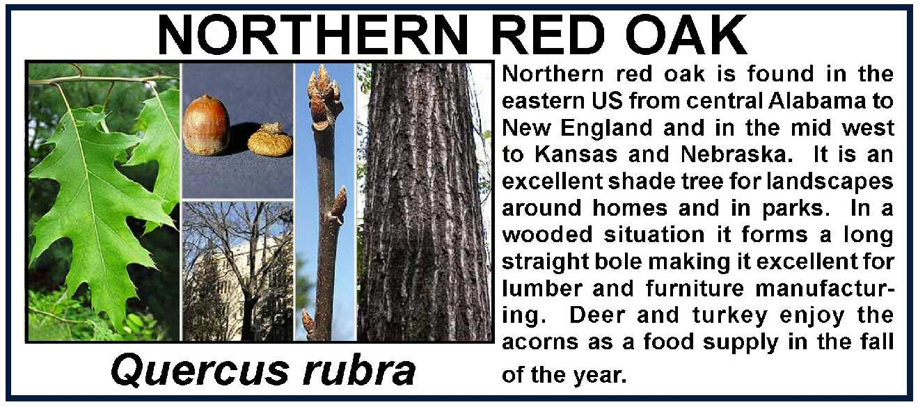 Byron Middle School Nature Trail